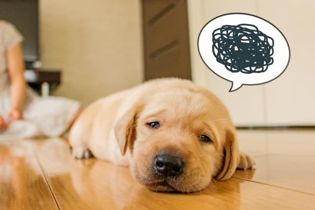 熱中症の犬